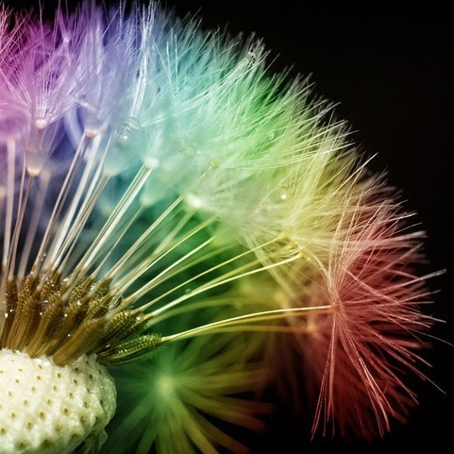 #dandelion #beauty #natural #colours #alyaka #instagood #spring #livebeautifully