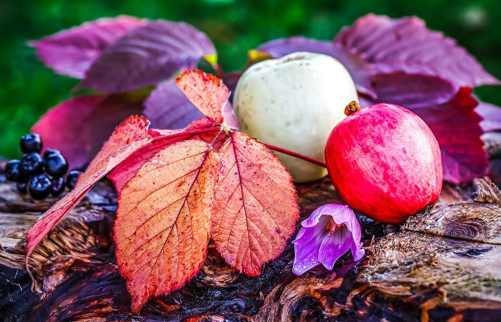 #Autumn  #autumnleaves #apple #beauty #naturakbeauty #colorful #instaautumn #september #alyakaofficial